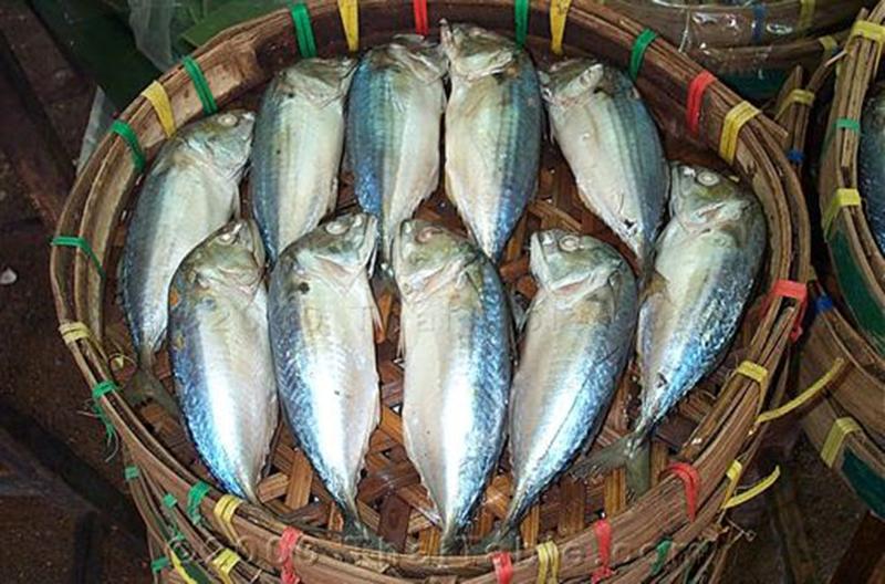 ปลาทูประโยชน์